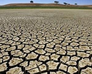 """Dom Sorondo: """"sensibilizar a opinião pública sobre as mudanças climáticas"""""""