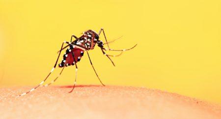Relação entre febre amarela e degradação ambiental é estudada